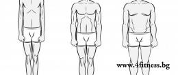 Типове тяло - Ектоморф, Мезоморф, Ендоморф
