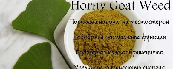 Horny Goat Weed - Трева от разгонен козел